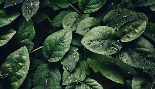 【恐怖】ベトナム戦争で余った枯葉剤が日本中に埋められてるって知ってました?